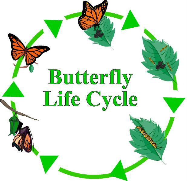 Life Cycle of a Butterfly | Ms Lally's Class Blog
